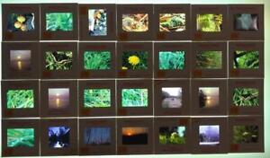 Vintage-Lot-of-28-Kodachrome-Color-Photograph-Slides-Nature-Outdoors-1970-039-s