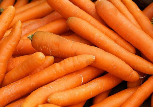 "early variety seeds SEED TAPE Carrot /""Amsterdamska/"""