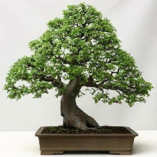Elm Tree Mandala Fanny Pack
