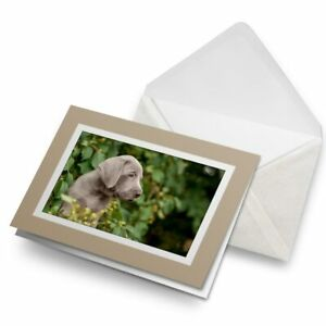 Greetings-Card-Biege-Weimaraner-Puppy-Dog-Cute-Pet-Animal-24418