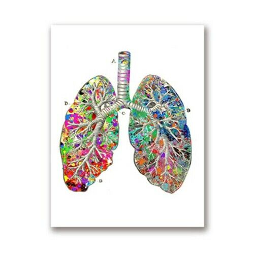 Watercolor Medical Posters Print Anatomy Art Canvas Painting Doctor Office Decor