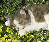 Fast Lebensgroße Sehr Schöne Liegende Katze 40c Garten Figur Schlafende Kätzchen