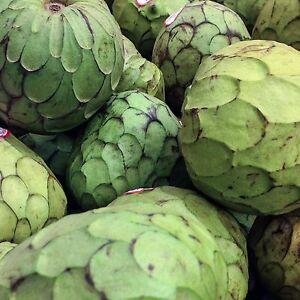 sahnig-suess-Rahmapfel-Cherimoya-10-Samen-seeds-Annona-cherimola-Custard-Apple