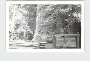 RPPC REAL PHOTO POSTCARD CALIFORNIA COLONEL ARMSTRONG REDWOODS STATE NATURAL RES