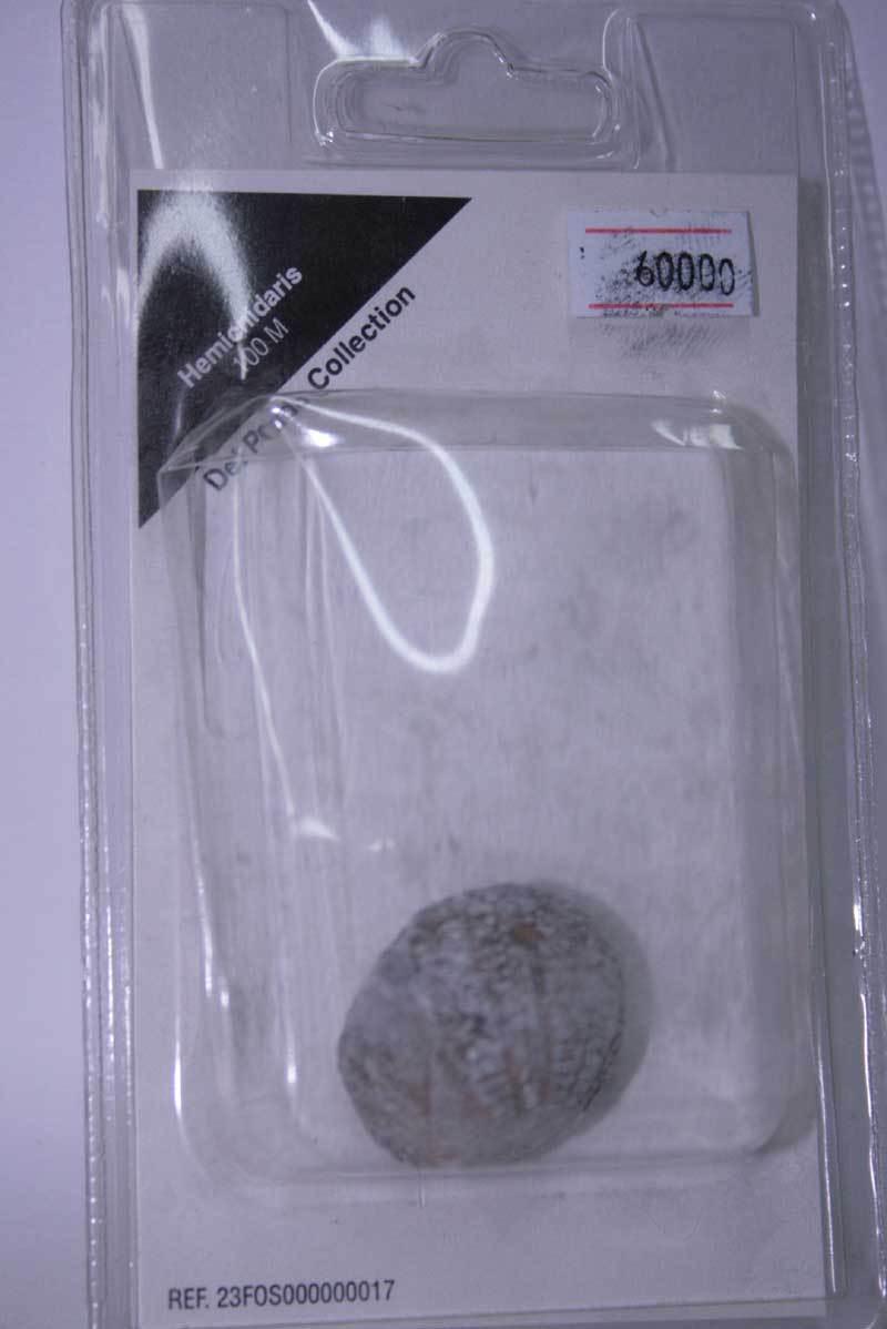 HEMICNIDARIS 100 M DEL PRADO Sammlung FOSSILE IN BLISTER SIGILLATO MG1 60000