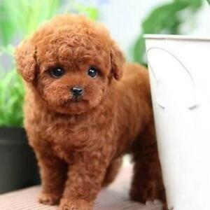 1x Realistic Teddy Dog Plush Toy Dog Puppy Static Stuffed Toy HOT Gift Free Ship