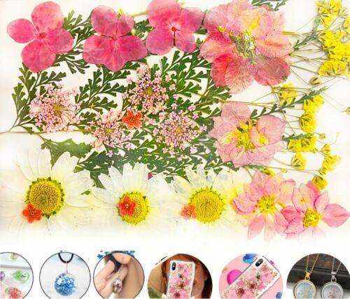 Mix Natural Pressed Dried Flower Leaf Ammi Dry Plants Epoxy Uv Resin Pendant