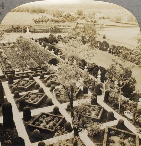 Williamsburg Keystone Stereoview of Formal Garden VA From Scenic America Set