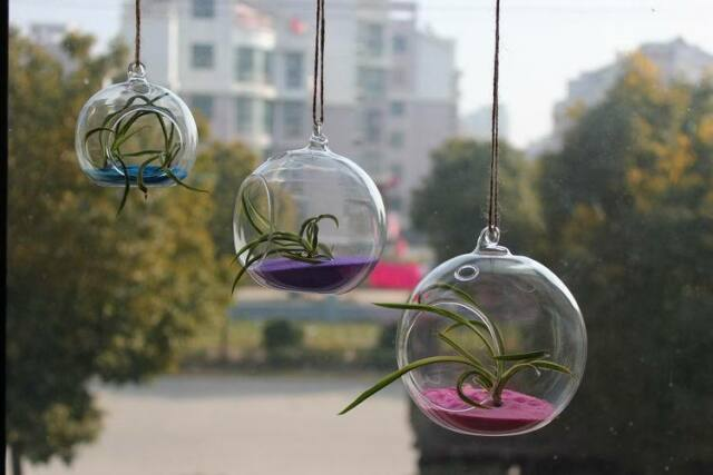 Glass Hanging Plant Terrarium Container Vase Pot Globe Ball x1  (Only Glass)