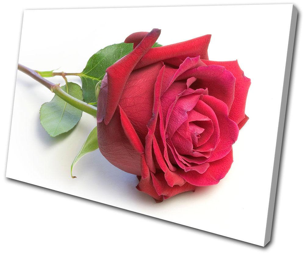 Floral Roses Flower LONA Love SINGLE LONA Flower pa rojo  arte Foto impresion b145e4