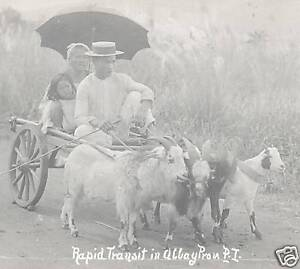 Goat-Car-photo-postcard-Albay-Philippines-ca-1915