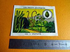 CHROMO 1939 CASINO LES FRUITS EXOTIQUES N°150 PAPAYE