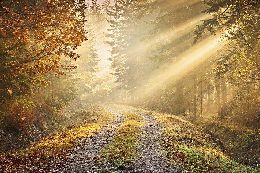315x232cm Riesiges Fototapete Wandtapete Herbst Wald Straße