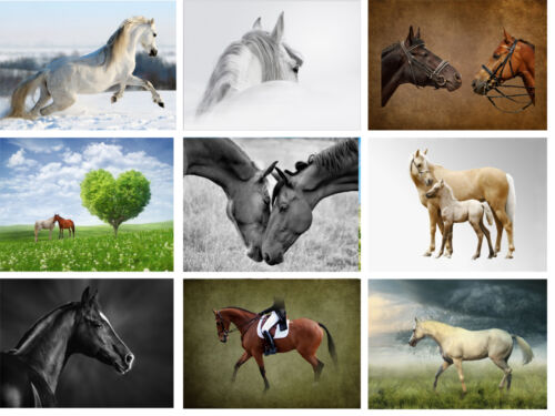 Single Equestrian Greeting Cards BUY 1 GET 1 FREE OFFER