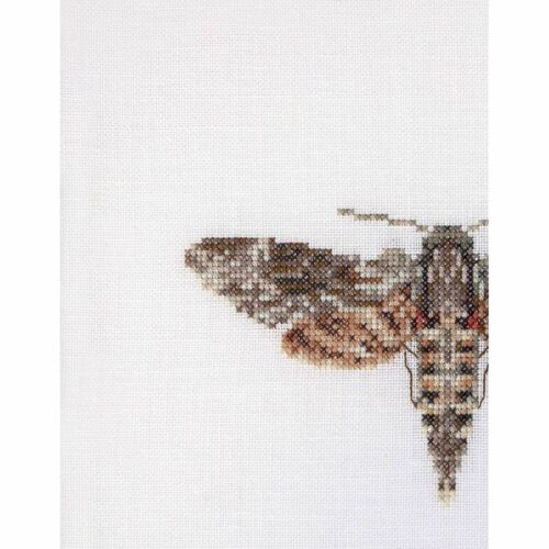 Thea Gouverneur 564  Sphinx moth  Counted cross stitch kit  Linen 36 count