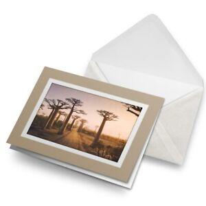 Greetings-Card-Biege-Baobab-Trees-Madagascar-Tree-3090