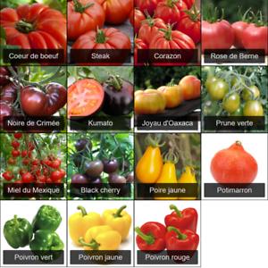 15 variétés 205 Graines de tomates poivrons et potimarrons Coeur de boeuf,...