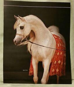 Named Oversized Arabian Horse Stallion ZT MAGNANIMUS Magazine Ad Photo Poster