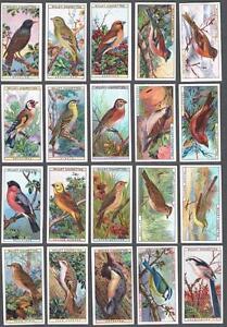 1915-Wills-s-Cigarettes-British-Birds-Tobacco-Cards-Complete-Set-of-50