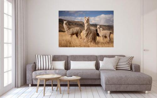 Lama Herde Südamerika Tier Leinwand Bild Wandbild Kunstdruck L0151