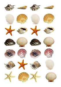 28-icing-cupcake-cake-toppers-decorations-edible-sea-seaside-shells