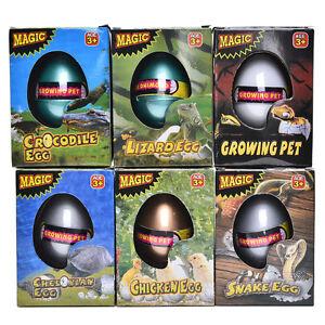 1-Pcs-Water-Hatching-Egg-Box-Large-Expansion-Animal-Egg-Kids-Educational-Toy-WL