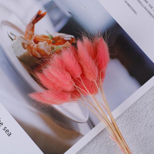 20x getrocknete Blumen Lagurus weiße Kunstblumen Kaninchenschwanz Gras Bou ZF