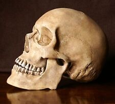 reproduction crane humain en  résine , realistic human skull