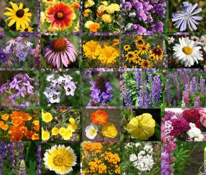 WILDFLOWER-MIX-CASCADE-PERENNIAL-1-Oz-Bulk-Seeds