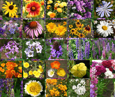 93,750 Seeds All Perennial Covers 500 SQFT Bulk Wildflower Seed Mix
