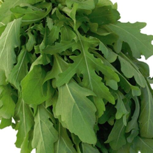 Rauke Salatrauke Rucola einjährig 5 g Züchtersaat für 10 m²  Samen