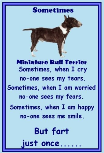 New Dog fridge magnets New Gift Miniature Bull Terrier