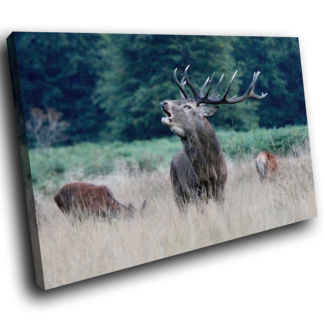 A564 braun Stag Grün Grass Funky Animal Canvas Wall Art Large Picture Prints