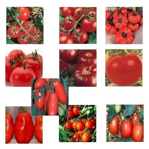 10 Arten 100 Samen Italienisches Tomaten Mischung