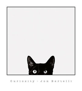 CAT ART PRINT - Curiosity by Jon Bertelli 18x20 Poster ...