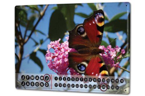 Dauer Wand Kalender Schmetterling Krakowski Aglais Metall Magnet