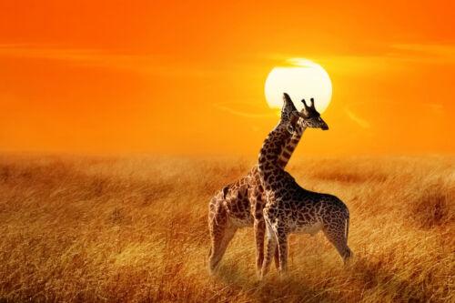 Nappes Papier Peint-Girafe 771 Animaux Afrique Savane Nature Steppe paysage arbre