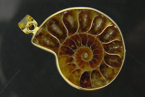 BUTW-Gold-Electroformrd-Ammonite-nautiloid-fossil-pendant-necklace-jewelry-7153P