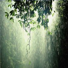 D053 Sounds of Nature Torrential Rain in a Tropical Forest