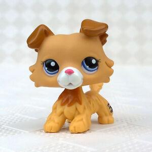 Rare Lps Toy Littlest Pet Shop Golden Cream Hair Collie Dog Puppy