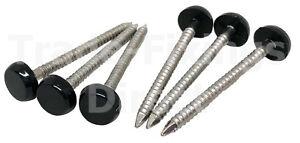 30 X 2.00 mm Blanco PVC Poli Top Pins//Uñas Plástico Cabeza De Acero Inoxidable A4