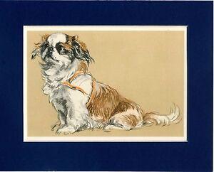 Lucy-Dawson-Pekingese-Colour-Print-Genuine-Vintage-1939