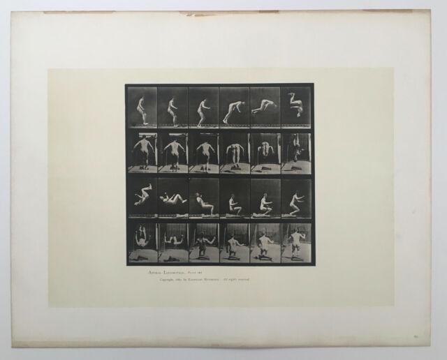 EADWEARD MUYBRIDGE authentic vintage 1887 collotype ANIMAL LOCOMOTION PLATE 363