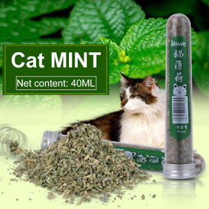 1-Bottle-Pet-Cat-Dried-Natural-Catnip-Mint-Leaves-Fresh-Breath-Clean-Mouth-Tools
