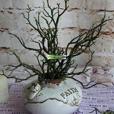3pcs Manzanita Artificial Dry Plant Tree Branch Fake Foliage Green Home Decor