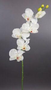Orchideenzweig-72cm-weiss-creme-DP-Kunstblumen-kuenstliche-Orchidee-Orchideen-Blum