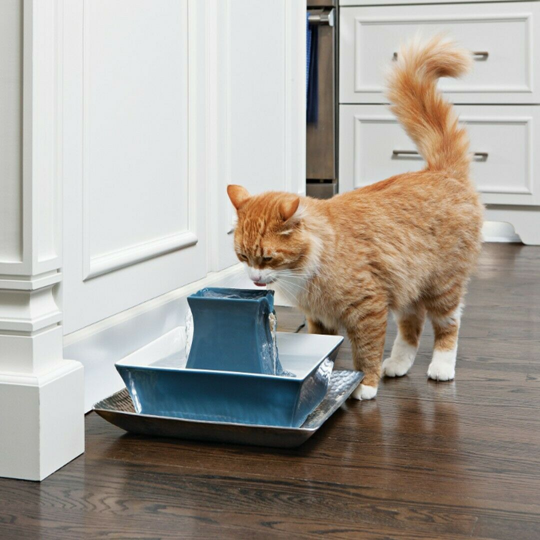 Fuente para mascotas Drinkwell® Pagoda  Azul