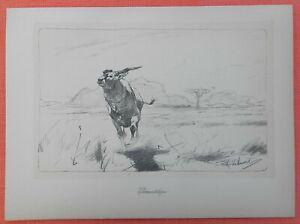 HonnêTe Elenantilope Taurotragus Oryx Wilhelm Kuhnert Afrique Lithographie 1920-afficher Le Titre D'origine