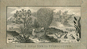 Collection-of-Four-18th-Century-Engravings