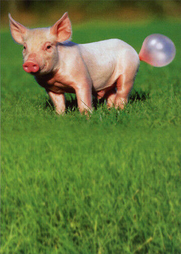Buy Pig Blowing Bubble Recycled Paper Greetings Funny Birthday Card Online